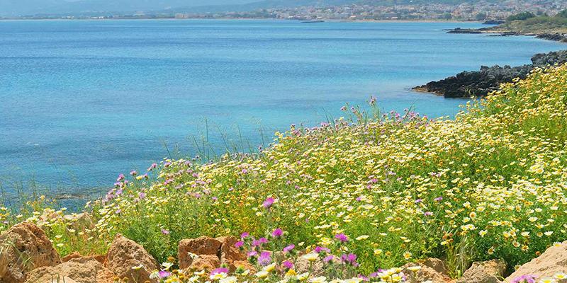 Crete Greece Bird Watching Flora Holidays Crete S Spring
